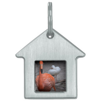 flamingo head on left side bird background pet ID tag