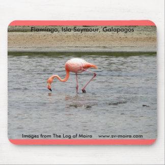 Flamingo, Isla Seymour, Galapagos Mouse Pad