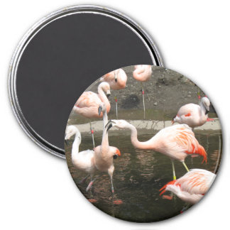 Flamingo magnet