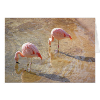 Flamingo Morning Card