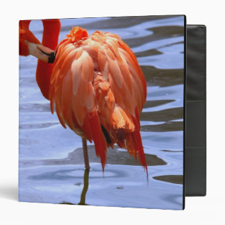 Flamingo on one leg in water binders