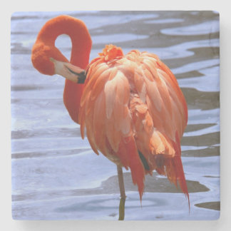 Flamingo on one leg in water stone beverage coaster