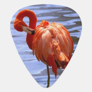 Flamingo on one leg in water guitar pick