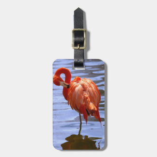 Flamingo on one leg in water luggage tag