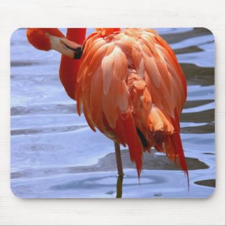 Flamingo on one leg in water mouse pad