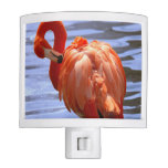 Flamingo on one leg in water night light
