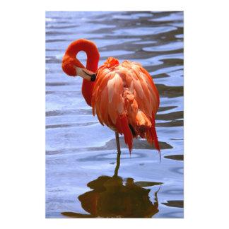 Flamingo on one leg in water photo print