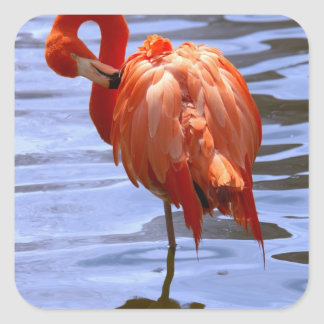 Flamingo on one leg in water square sticker