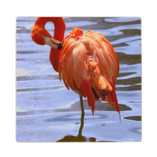 Flamingo on one leg in water wooden coaster