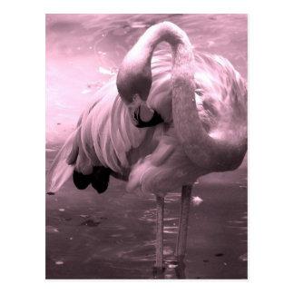 Flamingo photo tinted pink, pink flamingo! postcard
