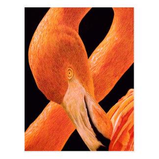 Flamingo Portrait Postcard