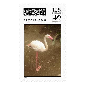 Flamingo Postage Stamps