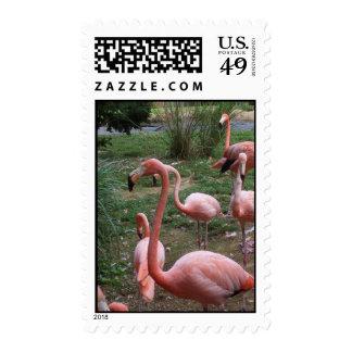 Flamingo Postage