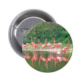 Flamingo Row at Lake in Spring,Birds Pink Wildlife 2 Inch Round Button