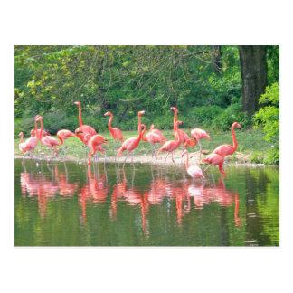 Flamingo Row at Lake in Spring,Birds Pink Wildlife Postcard