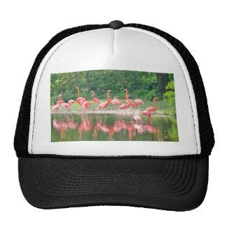 Flamingo Row at Lake in Spring,Birds Pink Wildlife Trucker Hat