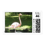 Flamingo Stamps