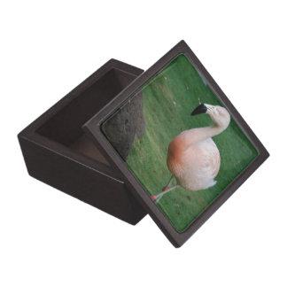 Flamingo Stroll Box Premium Gift Box