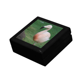 Flamingo Stroll Gift Box