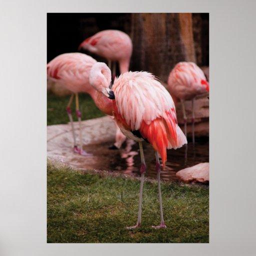 Flamingo - The Flamingo Poster