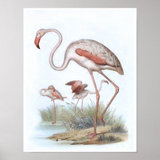 Flamingo Vintage Bird Illustration Poster | Zazzle