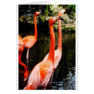 Flamingo Vote greeting card