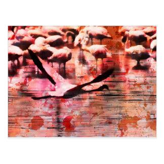 Flamingo Wisdom Postcard