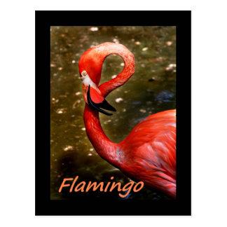 "Flamingo with ""flamingo"" pink text postcard"