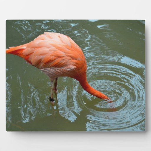 flamingo with head in water display plaque