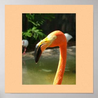 Flamingo with orange background poster