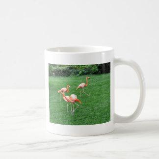 Flamingoes Coffee Mugs