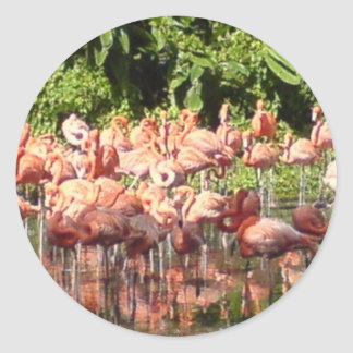 Flamingoes Stickers