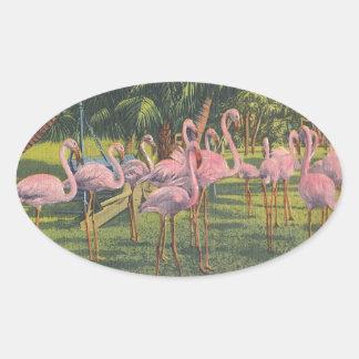 Flamingos at Miami, Florida Oval Sticker