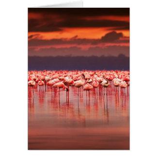 Flamingos at Sunset Card