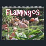 "Flamingos Calendar<br><div class=""desc"">This calendar features beautiful high-resolution images of flamingos. Party on and enjoy!</div>"