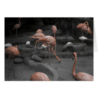 Flamingos! Card