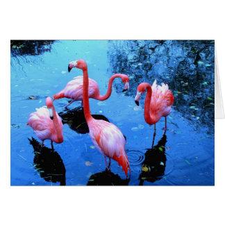 Flamingos dancing card