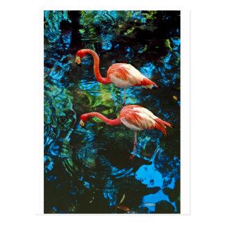 Flamingos FL Postcard