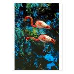 Flamingos FL Postcards