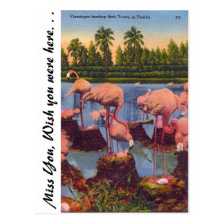Flamingos in Florida Postcard