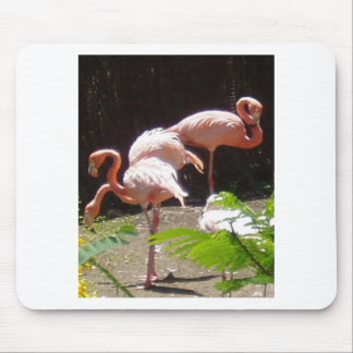 flamingos in Pink Mouse Pad