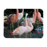 Flamingos in the Park 2 Rectangular Magnets