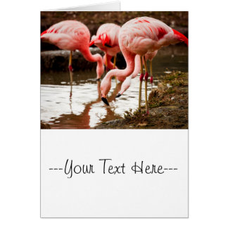 Flamingos In The Water Photograph Card
