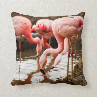 Flamingos In The Water Photograph Throw Pillow