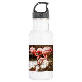 Flamingos In The Water Photograph Water Bottle