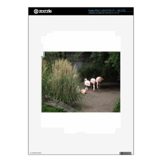 Flamingos iPad 3 Decal