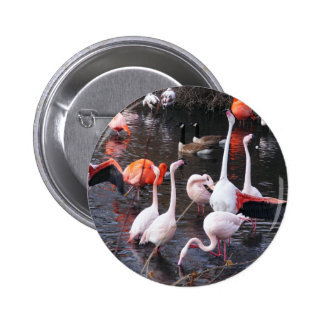 Flamingos: Look At Me! Button