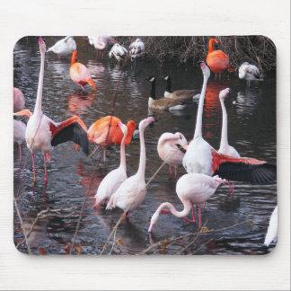 Flamingos: Look At Me! Mouse Pad