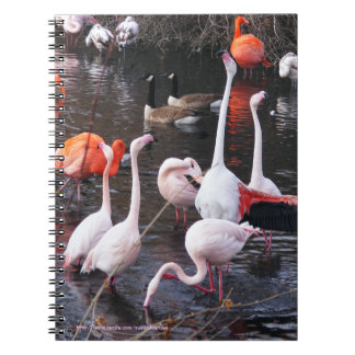 Flamingos: Look At Me! Spiral Notebook