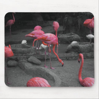 Flamingos! Mouse Pads